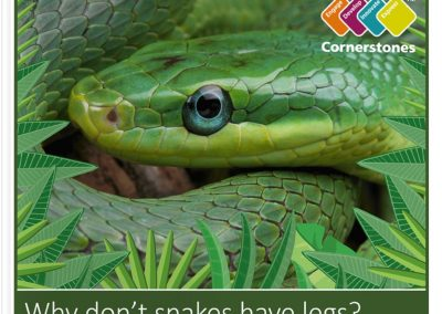 FS2 Cornerstones Project – Why don't snakes have legs?